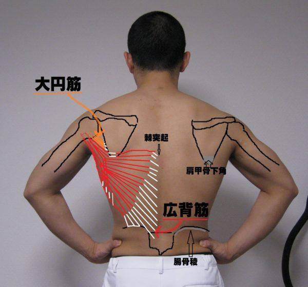 名前 背中 筋肉 背中の筋肉を鍛える筋トレ方法!肩こり腰痛が気になる人必見